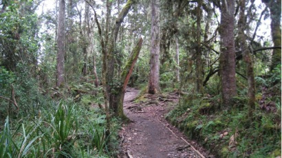 kilimanjaro-climate-zones