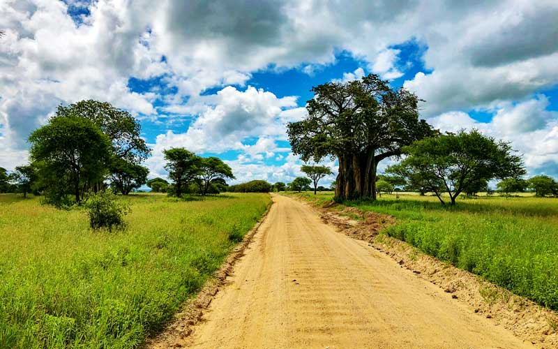 Baobab-trees-dirt-road-tanzania-safari