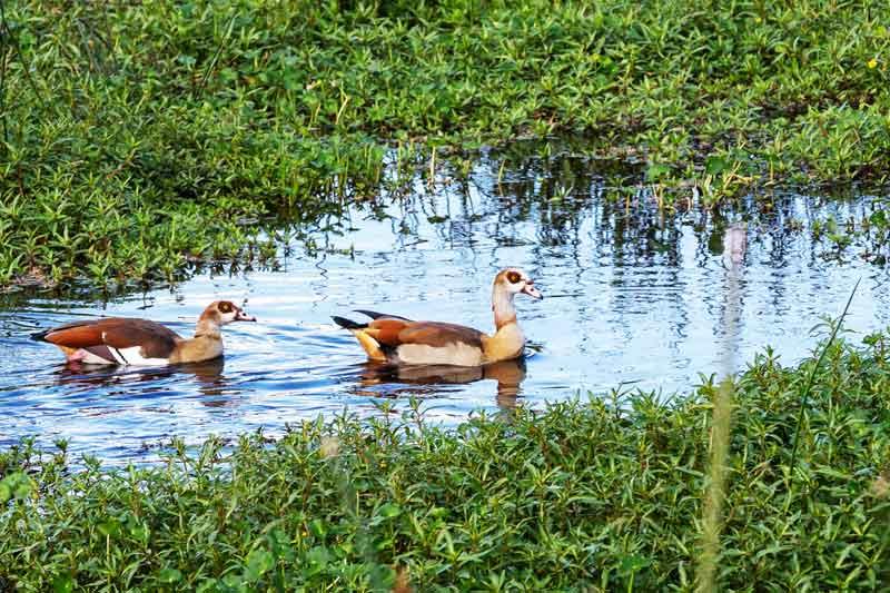 Birds-water-swamps