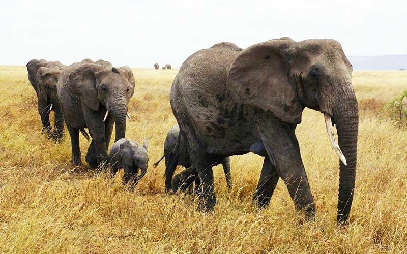 Elephant-family-with-baby-elephant