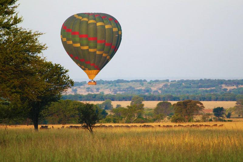 Hot-air-baloon-safari-over-herd-of-wildebeest