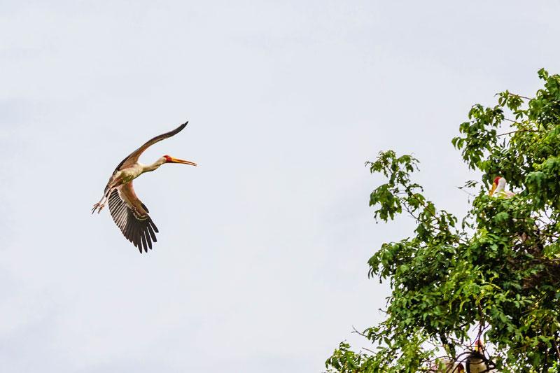 Stalk-flight