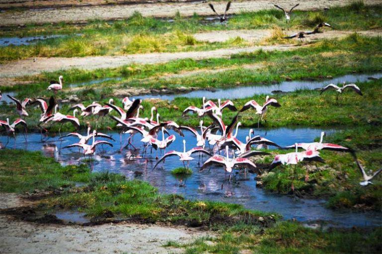 Arusha-National-Park-Flamingos