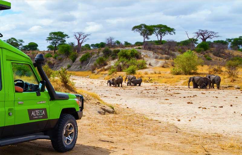Best-Tanzania-Safari-Companies