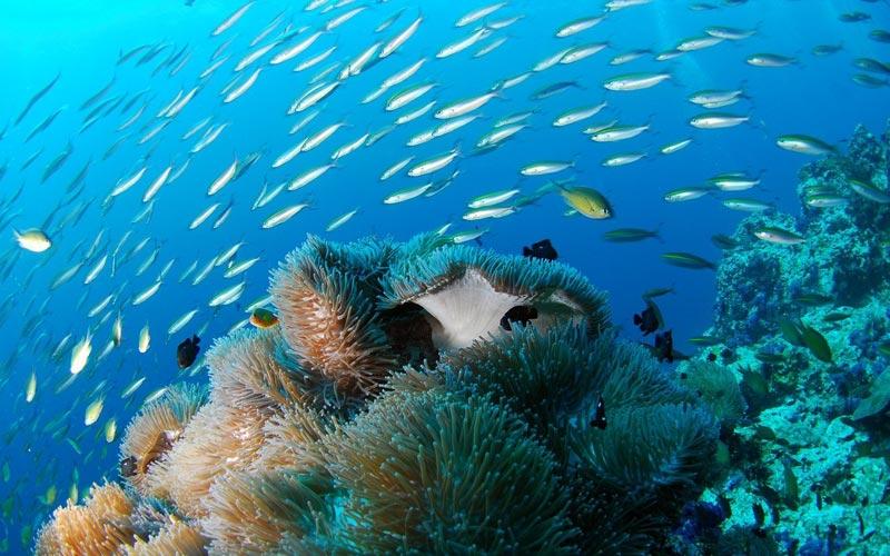 Coral-Reef-fish-Zanzibar