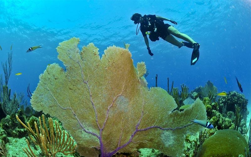 Diving-Zanzibar-Coral