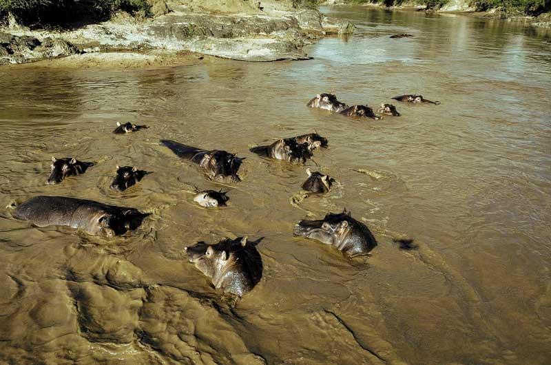 Katavi National Park Hippos