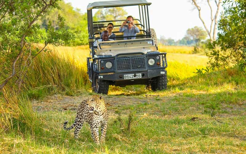 Leopard-private-safari-car-photo