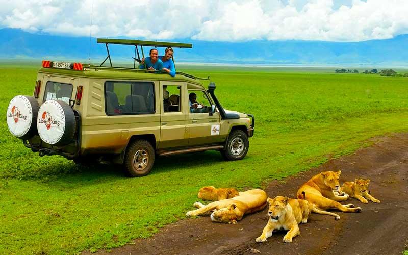 Lion-king-adventures