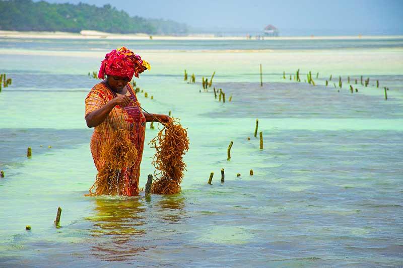 Local-Fishing-Zanzibar