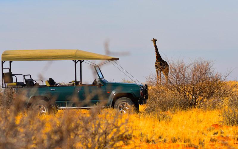 luxury tanzania safari