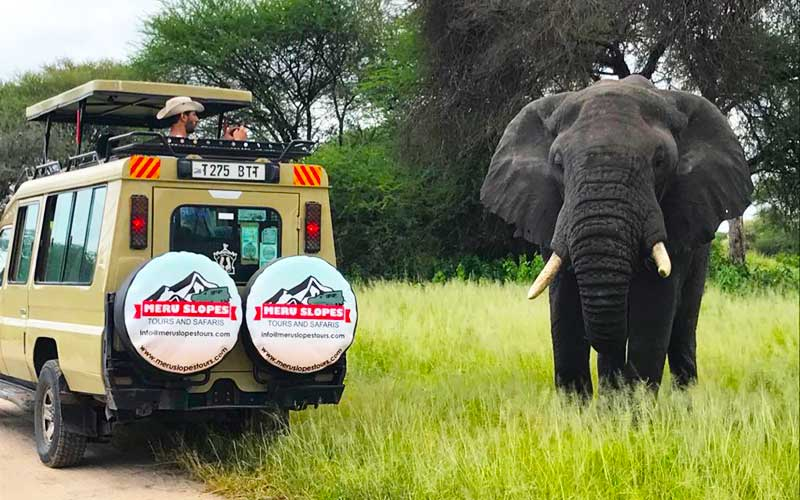 Meru Slopes Tours and Safaris