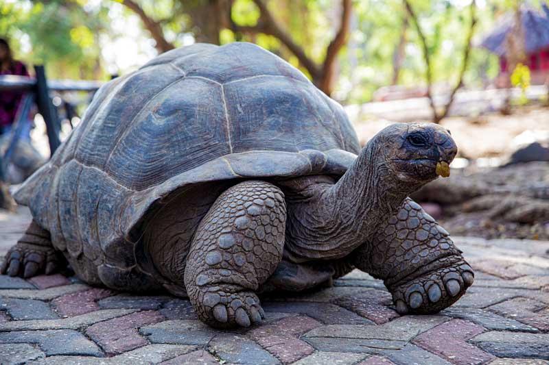 Sea-Turtle-Zanzibar