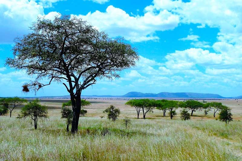 Serengeti-Plains