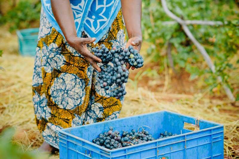 Tanzania-Food-Grapes-Wine