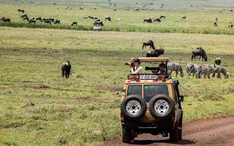 Yellow-Zebra-Safaris