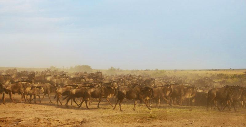wildebeest-migration-serengeti-dust