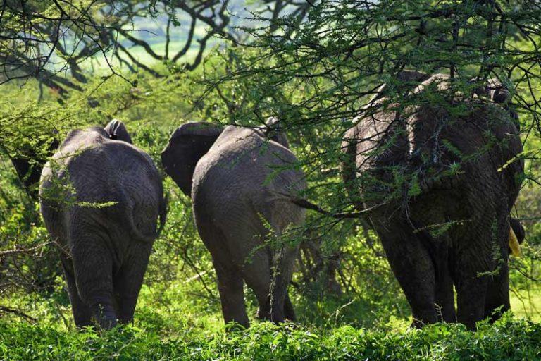 Budget-Safari-Tanzania
