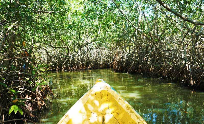 Mangrove Forest Zanzibar Pemba Island