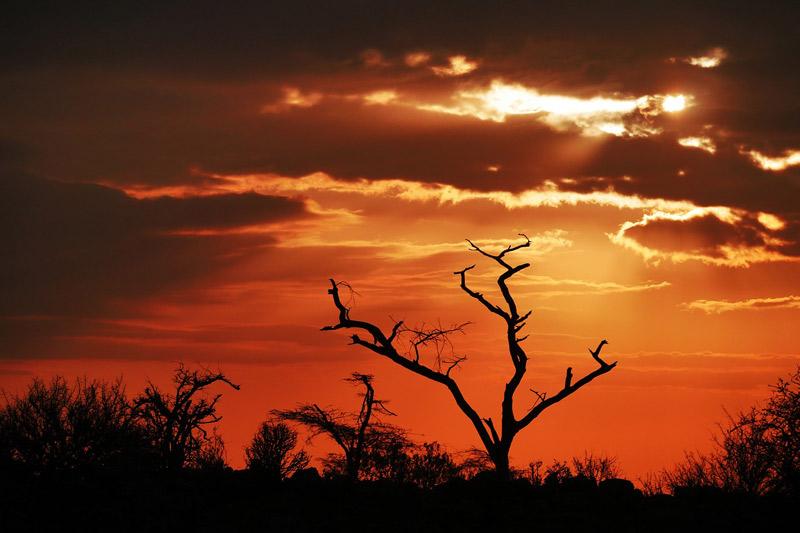 Sunset-in-Africa-Tanzania-Safari